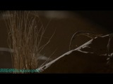 BBC «Дикая Аравия (1) - Песок, Ветер и Звёзды» (Документальный, 2013)